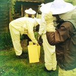 Splitting the Bee Colony