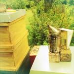 a Smoker - an essential beekeeping equipment