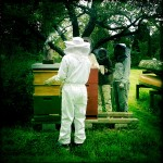 ready to check the Bee Colony