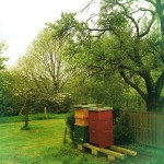 some of the Hives